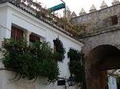Córdoba verdiazul. perla sur.