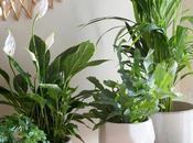 plantas ayudan subir ánimo