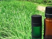 Aceite Citronela, usos, beneficios cómo hace