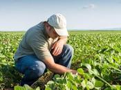 Entrevista Edgardo Vilcara bondades cultivos genéticamente modificados (OGM)
