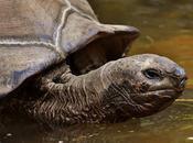 "¿Qué significa ""tortuga""?"