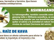 [Infografía[ Hierbas para aliviar Estrés