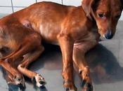 Cinomosis canina: ¿Qué ¿Cómo ocurre? Signos clínicos prevención