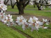 arbol flor (Ser como àrbol)
