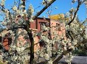 Inicio nuevo árboles frutales.