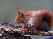 Consejos para fotografiar fauna local