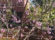 paraguayo, otro árbol frutal inicia ciclo.