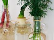 Cómo rebrotar vegetales agua