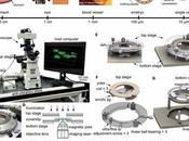 #Nanovedades: manipulación intracelular mediante pinzas magnéticas