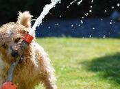 mejores maneras proteger perro golpe calor