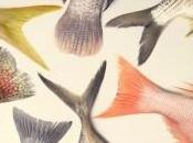 pescado fresco sigue llenando cesta compra