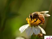 ¿Qué significa soñar abejas?