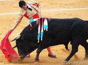 Consagración medio toro