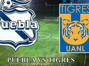 Puebla empató contra tigres liga