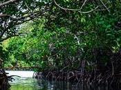 manglares mundo maya