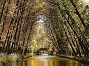 Desde río, reflejos dorados