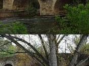 Imagen mes: Puentes Nuevo Lázaro, Plasencia