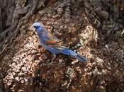 Realizarán estudio fauna flora afectada Sierra Migulito