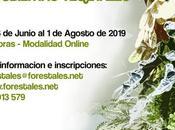 Nuevo curso online jardines verticales cubiertas vegetales