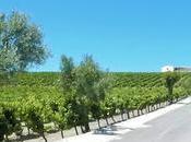 ATENEO VINO PUERTO: Visita viña bodega Blanquita»