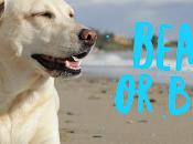 ¿Beach Bitch? ¿Cuál diferencia? fonema inglés