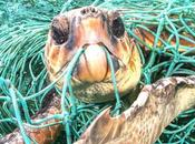 Campañas sobre plástico nuestros mares