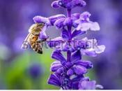 Buscadores néctar