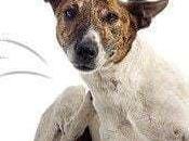 Eliminar pulgas perros gatos naturalmente forma ecológica