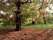 Parques Reales Londres: Hyde Park, Greenwich Park… (guía 2019)