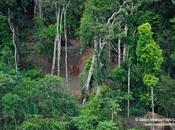 existen tribus aisladas Mundo. (Fotos tomadas Brasil)