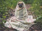 Como ayudar mascota días fríos