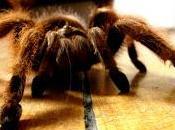 Cuentos fantásticos (1980), juan josé arreola. estrategia araña.