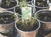 Plantas medicinales podemos sembrar jardín balcón