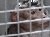 peores empresas para animales