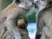 Bichotos besándose:)