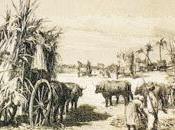 solo plata. mercancías americanas arribaban cádiz durante reinado carlos