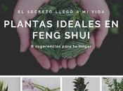 Plantas ideales para Feng Shui