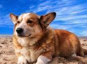 Viajar perro forma segura