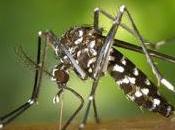 Evitar picadura mosquito tigre (prevención)