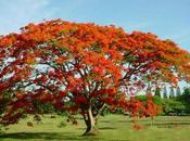 Colores Jardín