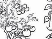 Libro sobre conservación familiar semillas