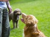 ¿Como entrenar perro?