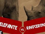 duradera rivalidad entre rinoceronte elefante