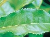 cada diez andaluces recurre plantas medicinales para perder peso