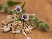 Malvavisco, propiedades contraindicaciones esta planta medicinal