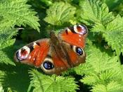 Mariposas invierno