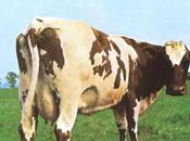 "Pink Floyd. ""Atom Heart Mother"""