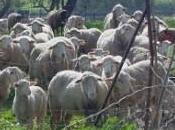 Fotos Ambientales Conil Agricultura Ganadería