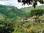 Paisaje Norte Valle también Patrimonio Humanidad