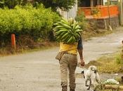Hábitos ganaderos ecuatorianos durante COVID-19